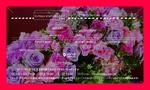 cyrille_card_160622_ol-02.jpg